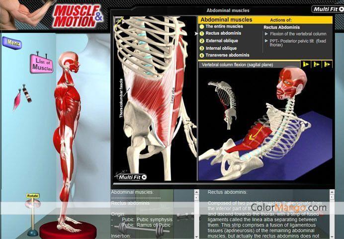 Muscle And Motion скачать торрент - фото 9