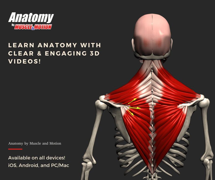 Muscle & Motion - Anatomy Screenshot