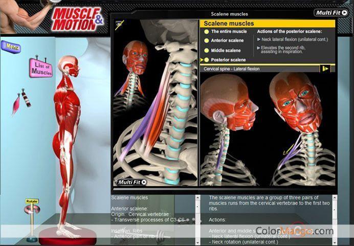 Muscle And Motion скачать торрент - фото 11