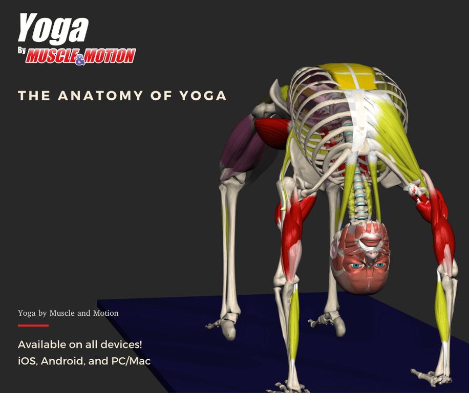 Muscle&Motion YOGA Screenshot